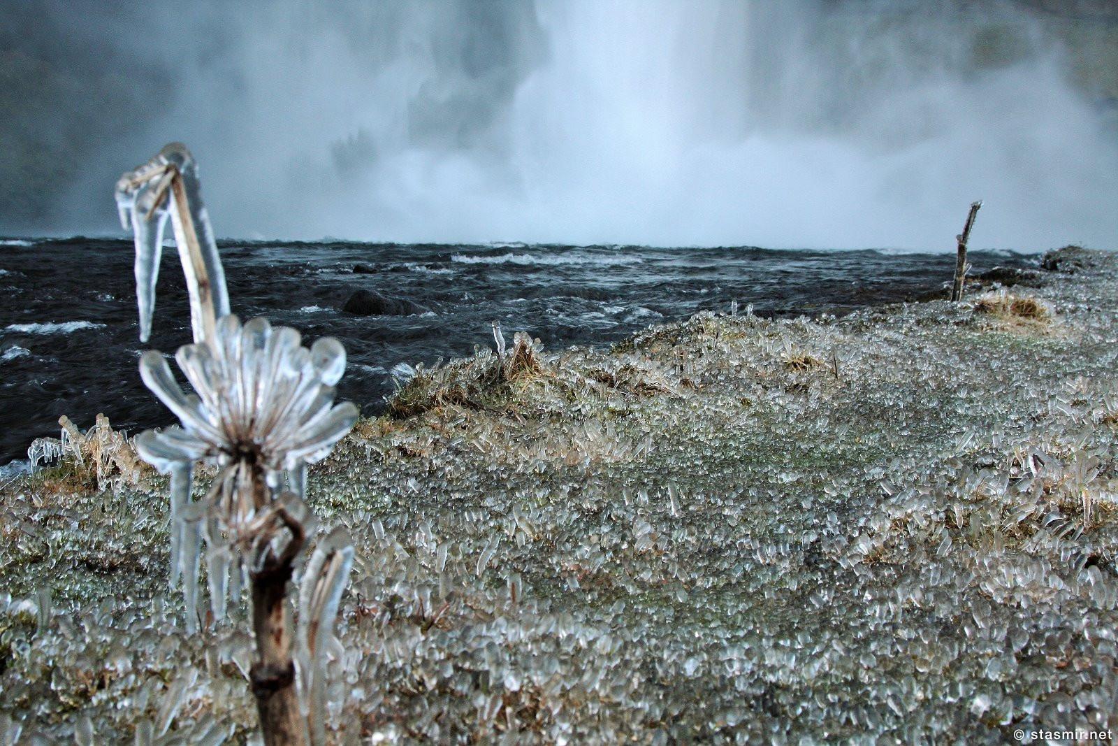 ледяной цветок дударя в Исландии у водопада Сельяландсфосс, Южный Берег Исландии, Seljalandsfoss