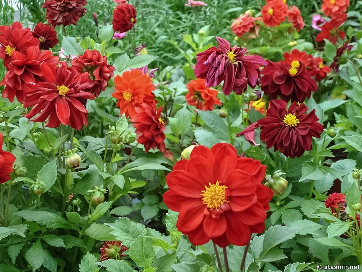 blom i hveragerdi