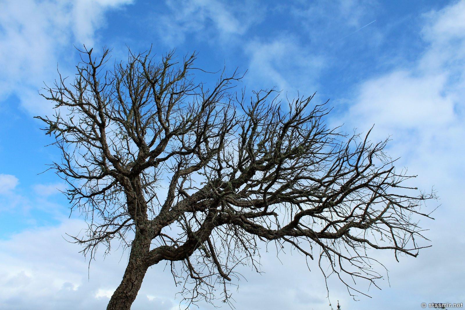 фотография дерева где-то в Португалии, фото Стасмир, photo Stasmir