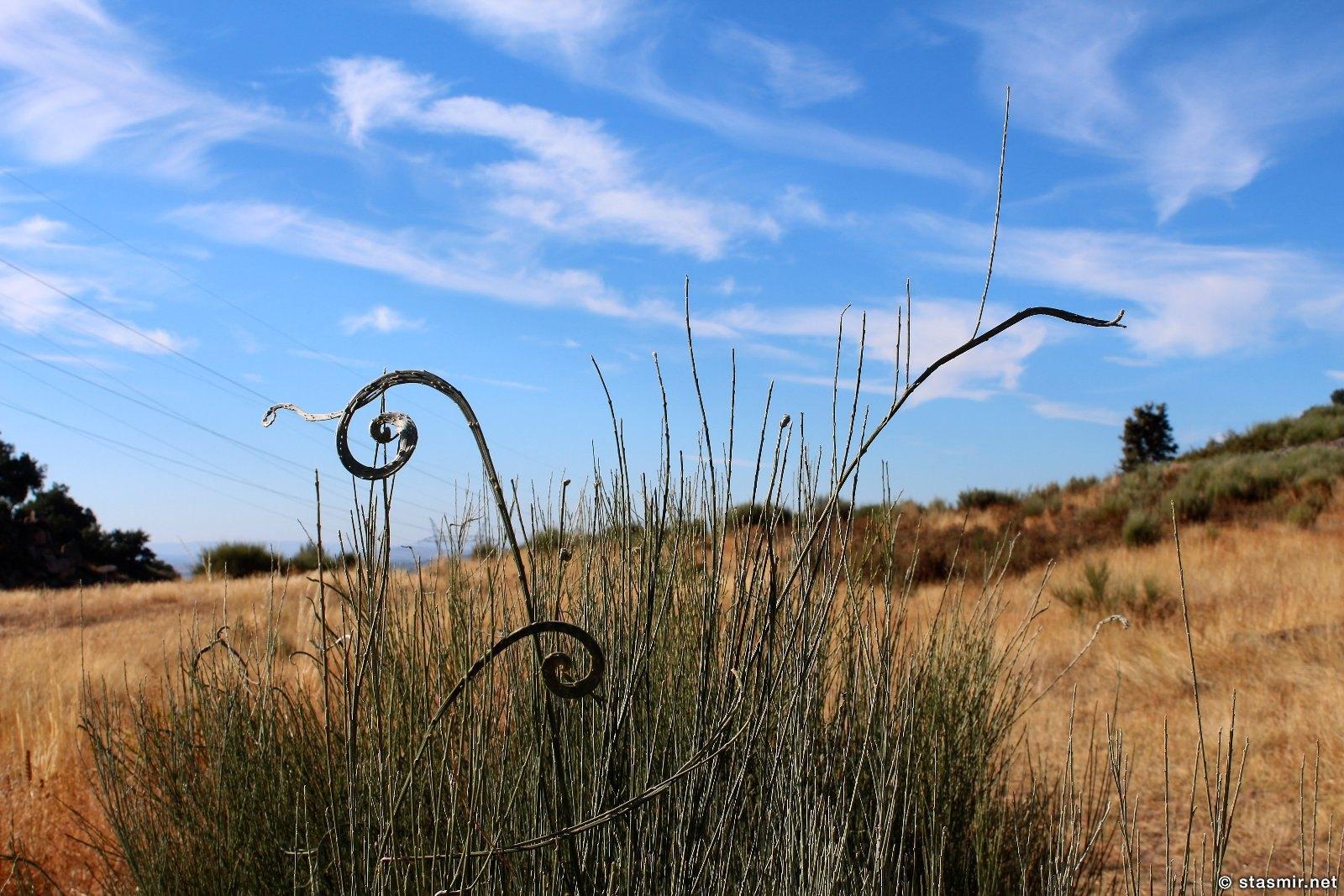 травы Португалии, фото Стасмир, photo Stasmir
