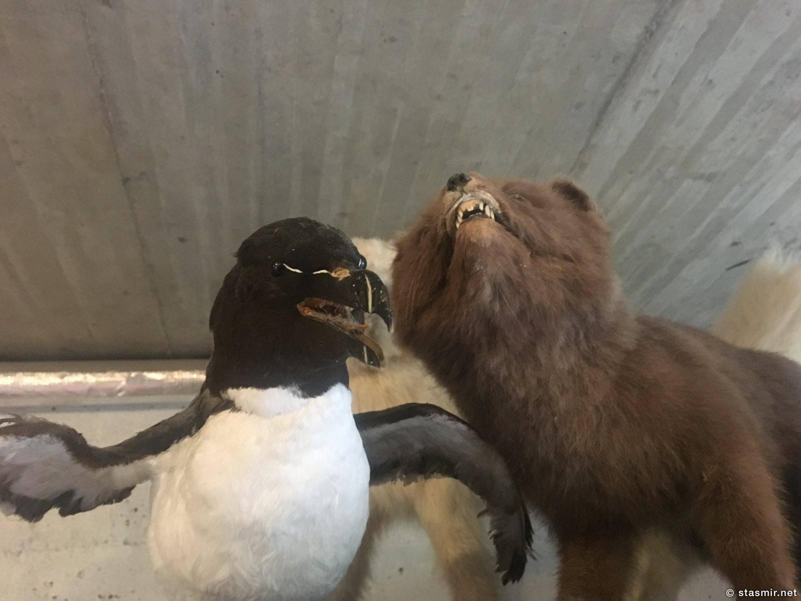 полярная лиса и кайра - заоговрщики-ученые на тему глобального потепления, фото Стасмир, Photo Stasmir