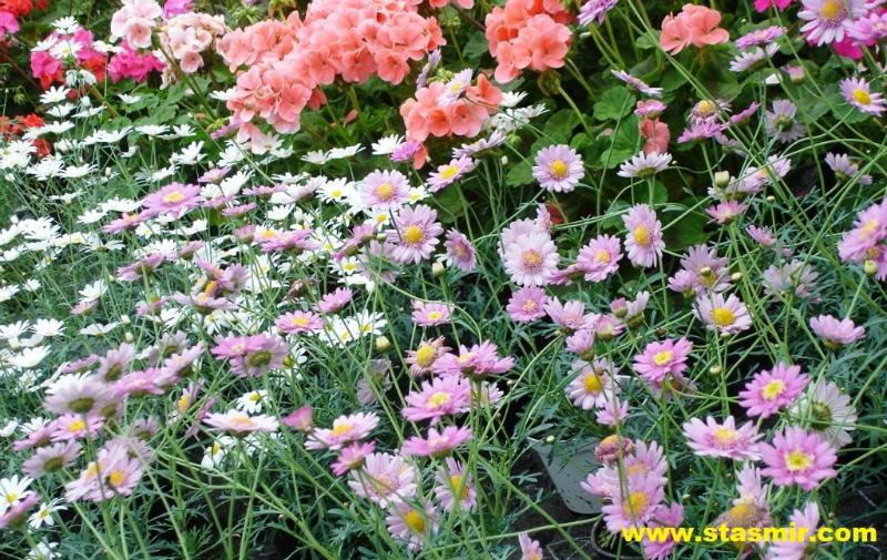 flower-power-edem