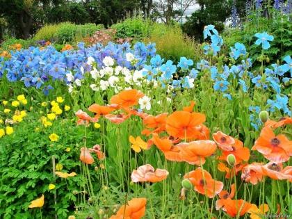 исландский север, Акюрейри, Arctic Botanical Gardens, Ботанический сад Акюрейри, Lystigarður Akureyrar, Photo Stasmir