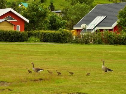 Aðalstræti, Akureyri, Акюрейри, центр Акюрейри, велосипед в Акюрейри, северная столица Исландии, гуси, Photo Stasmir