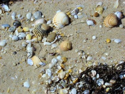 камни и ракушки на Ria Formosa или Риа-Формоза, Ilha Deserta, Algarve, пляж в Алгарве, фото Стасмир, Photo Stasmir