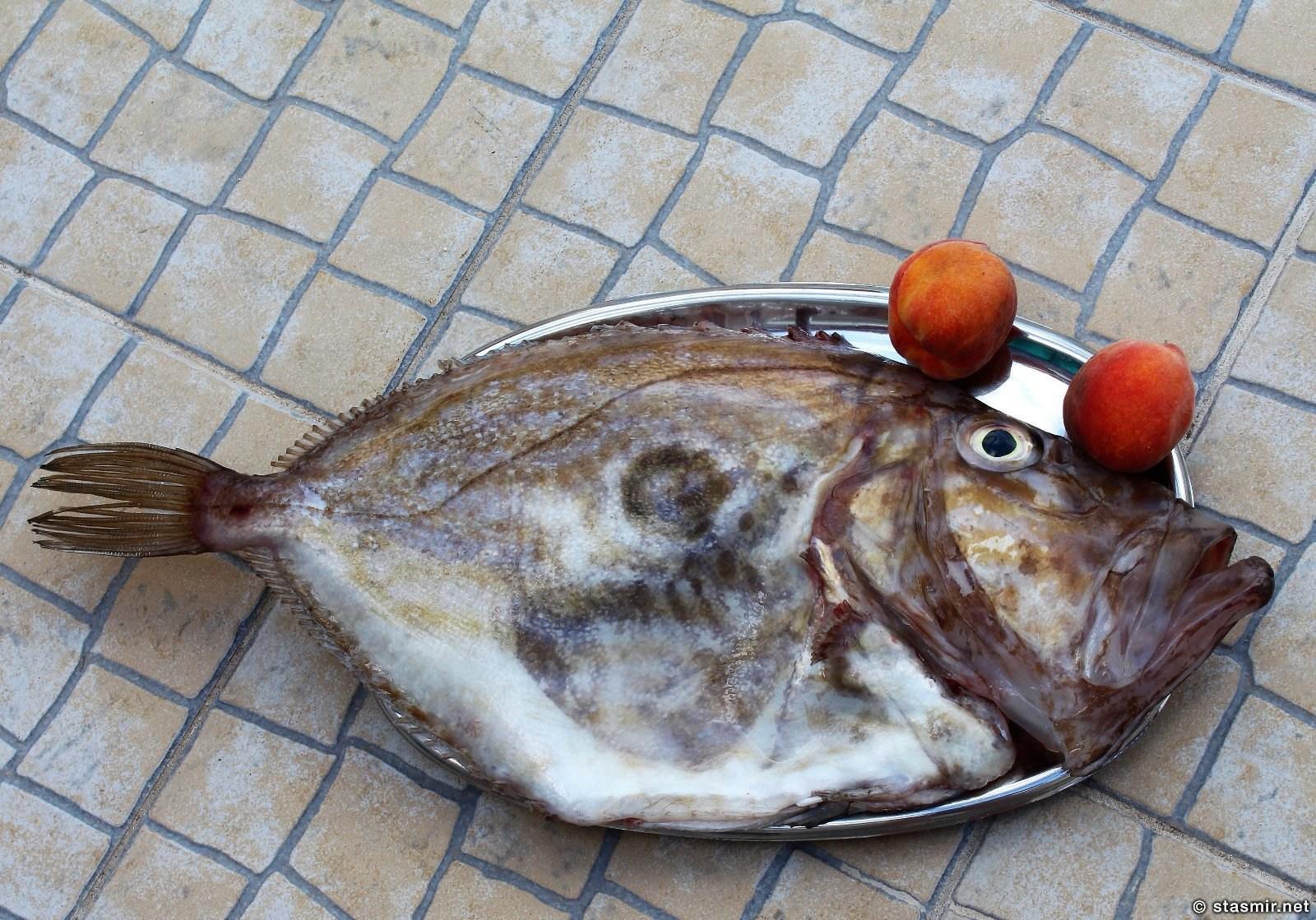 рыба-петух в Португалии, фото Стасмир, Photo Stasmir