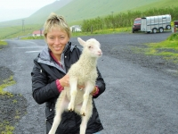 save the lamb