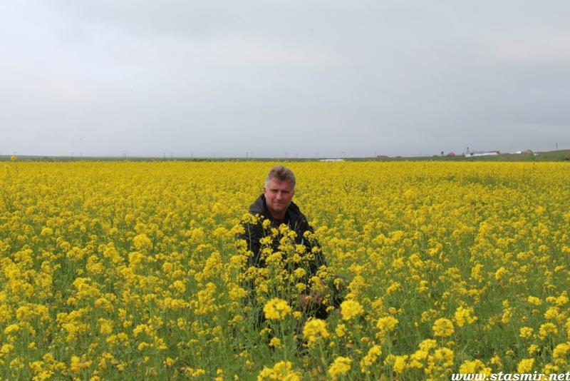 alfalfa-fields-forever