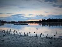 виды Исландии, Рейкьявик, пруд Тьёрнин, 101 Рейкьявик, Photo Stasmir