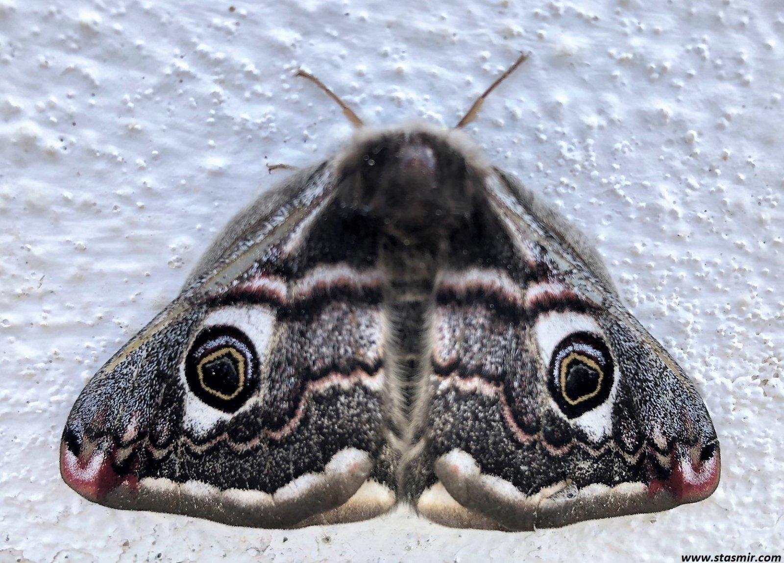 черная бабочка - эмблема печали). Фото Стасмир, Photo Stasmir