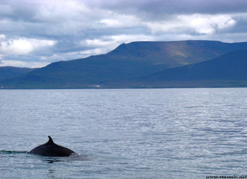 dolphin power