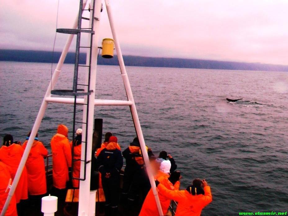 orange-whale-watch