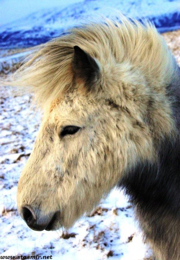 hesturinn