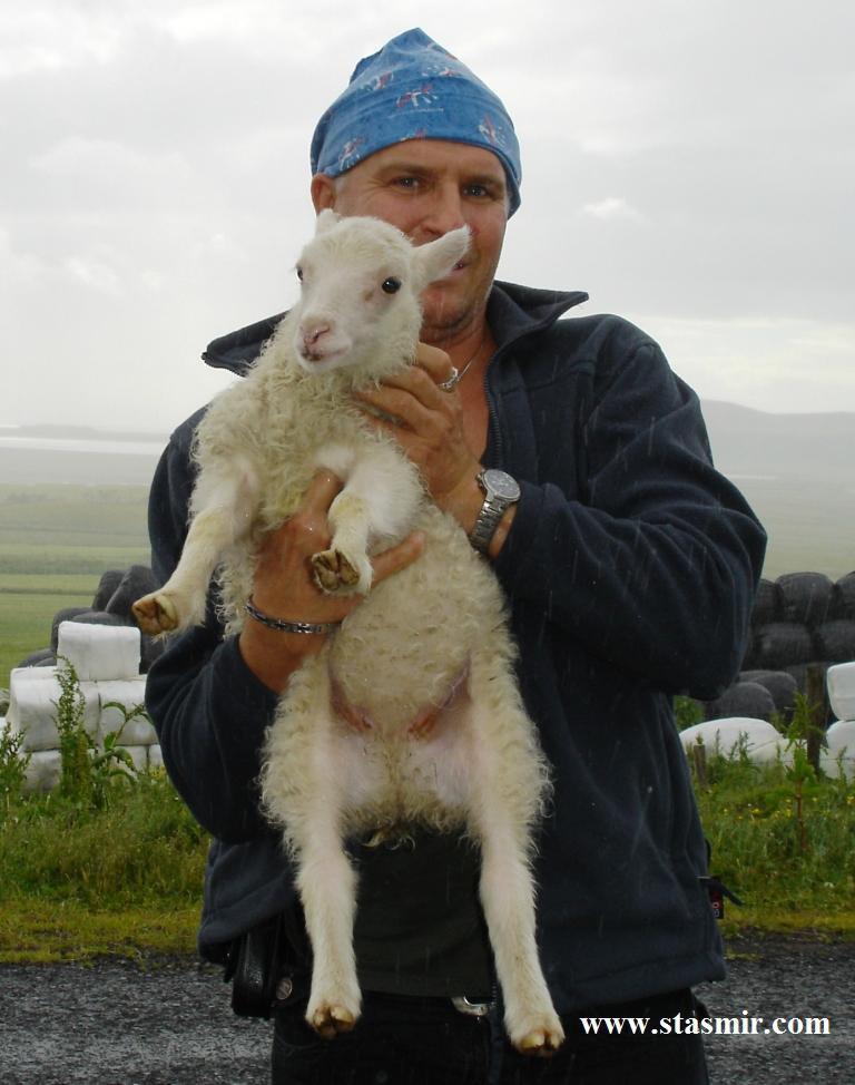 Акция: поймай барана - спаси Исландию! исландский барашек, 2008 год, Вик, Южный Берег, стасмир
