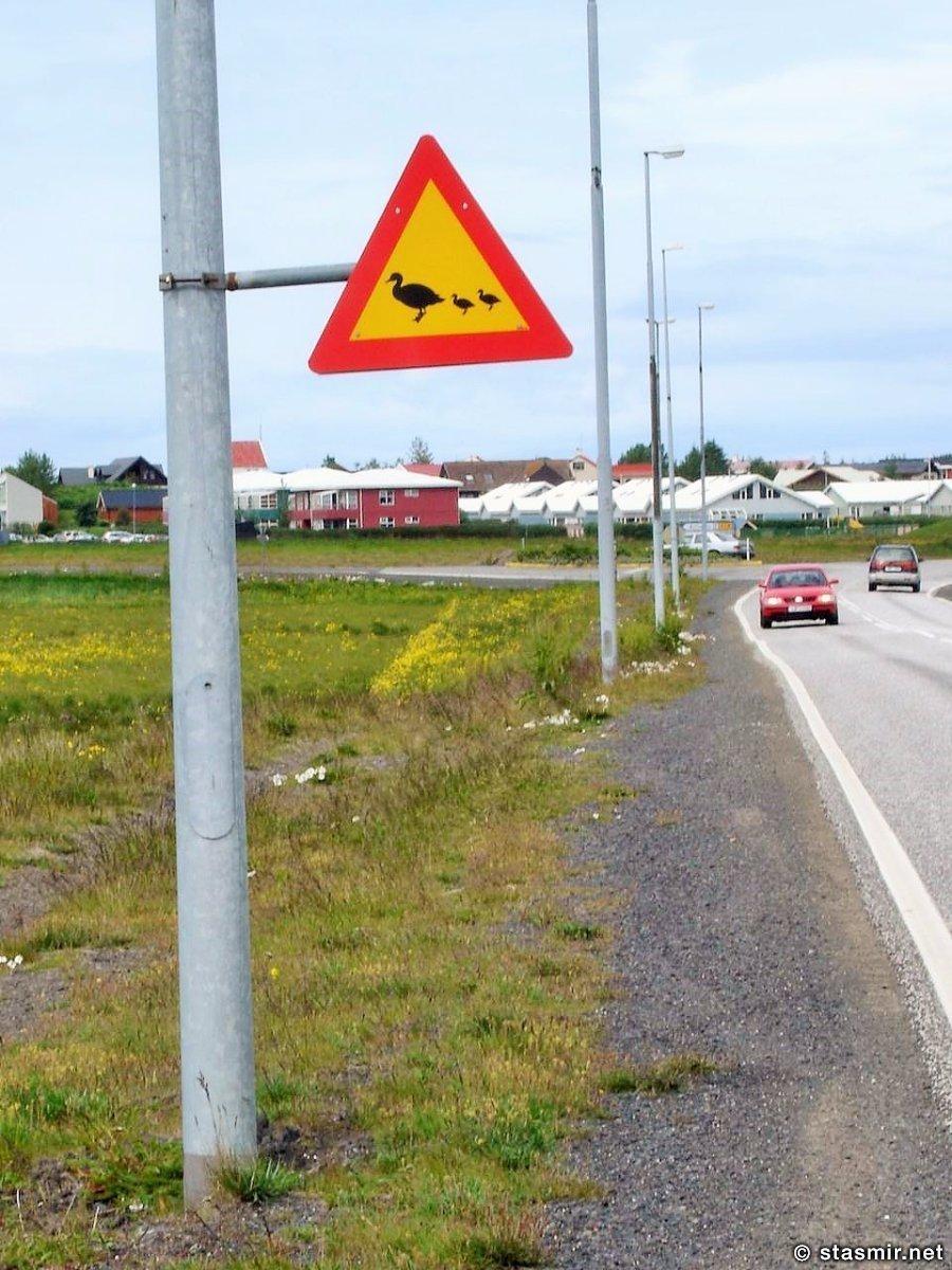 Резиденция президента Исландии Бессастадир в Большом Рейкьявике, Знак осторожно утки, фото Стасмир, photo Stasmir