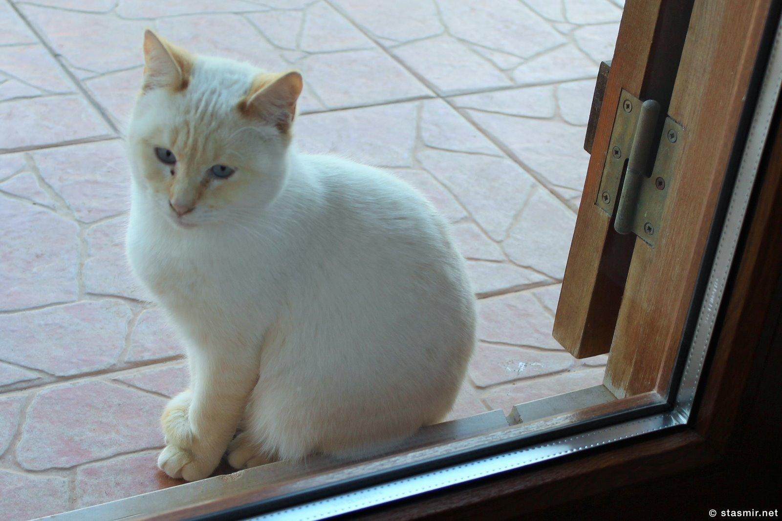 кошка за дверью, Казаиш-да-Санта-Тереза, Фото Стасмир, Photo Stasmir