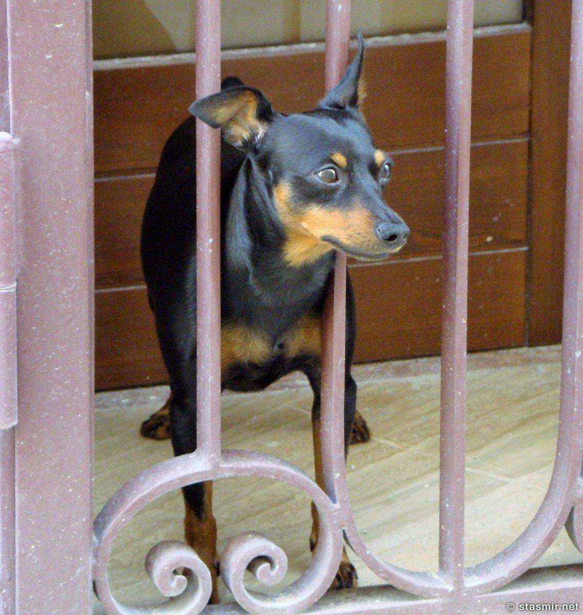 В собачьих глазах собачья тревога: