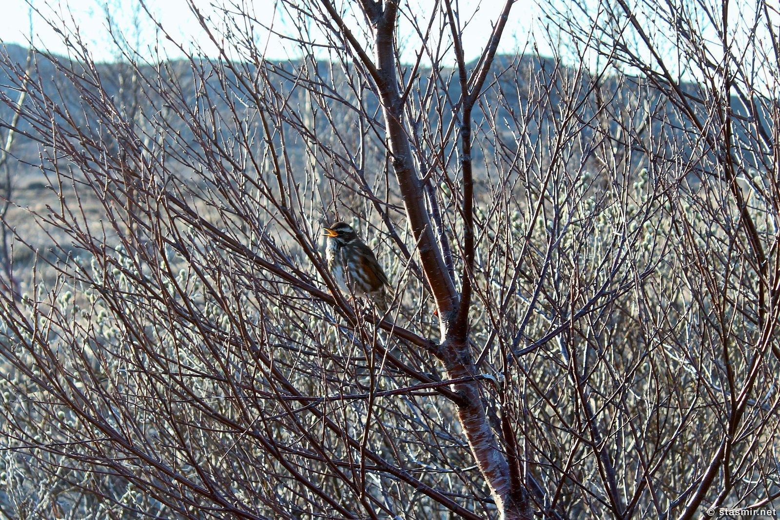 Úlfarsfell, птицы, фото Стасмир, Photo Stasmir