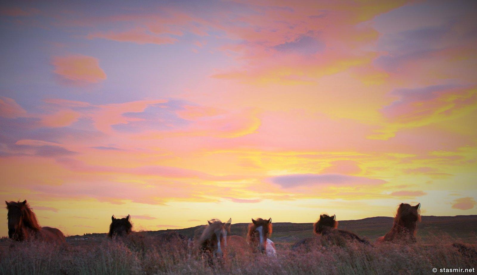 поля и лошади на ферме Нес, Рейкхольт, фото Стасмир, photo Stasmir, Серебряное кольцо Исландии, исландские лошадки