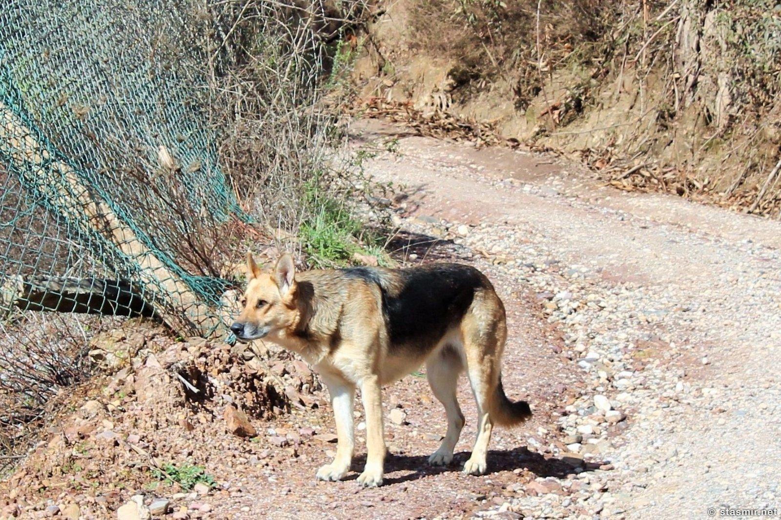 собака на пешей тропе вокруг Мармелете, Альгарве, фото Стасмир, photo Stasmir, Percurso Pedestre de Marmelete, Моншик, Мармелете