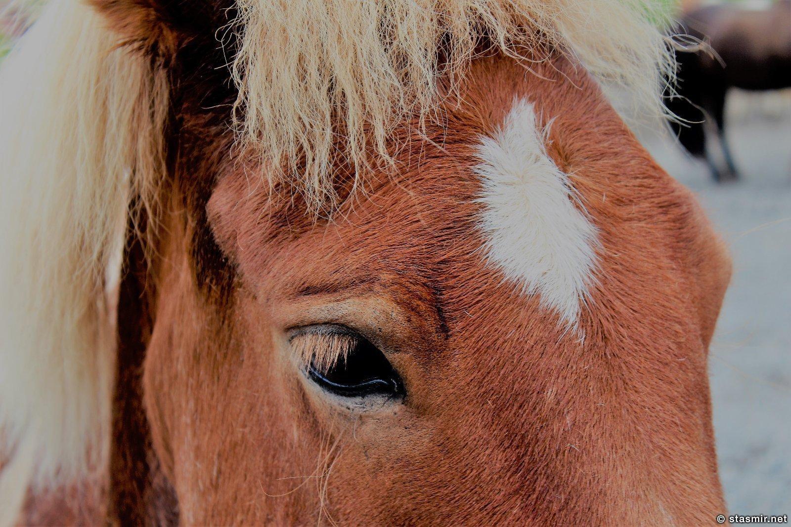 глаза исландской лошадки, фото Стасмир, Photo Stasmir