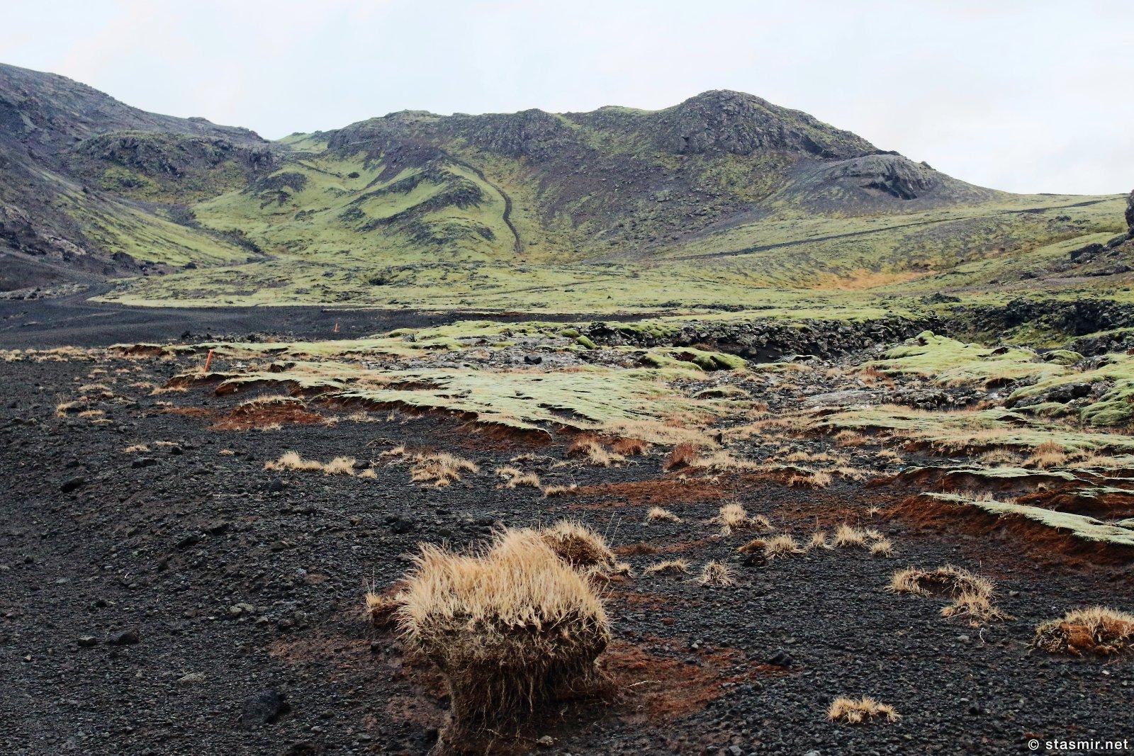 колосняк, фото Стасмир, photo Stasmir, Исландия, на полуострове Рейкьянес