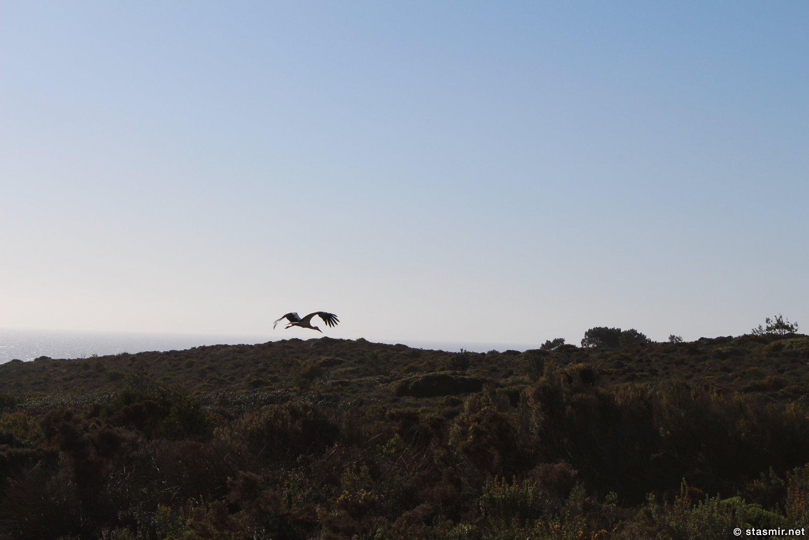 журавль в Португалии, фото Стасмир, Photo Stasmir