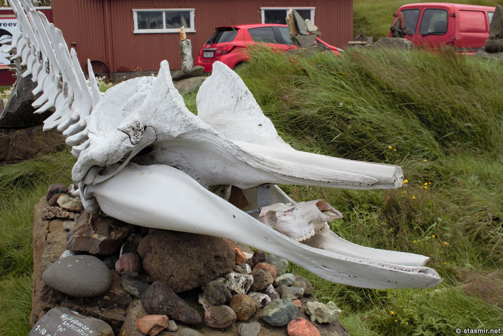 череп кита, фото Стасмир, photo Stasmir. Djúðivogur