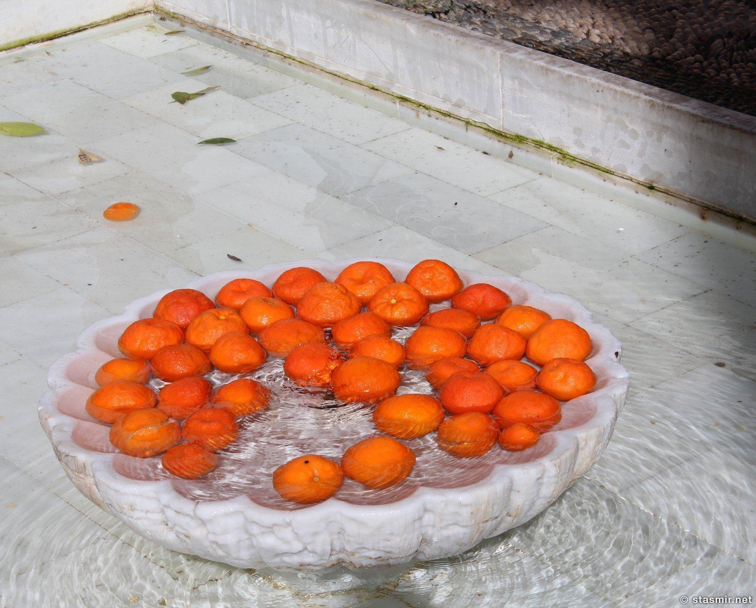 Апельсины в Кородве, Испания, фото Стасмир, Photo Stasmir