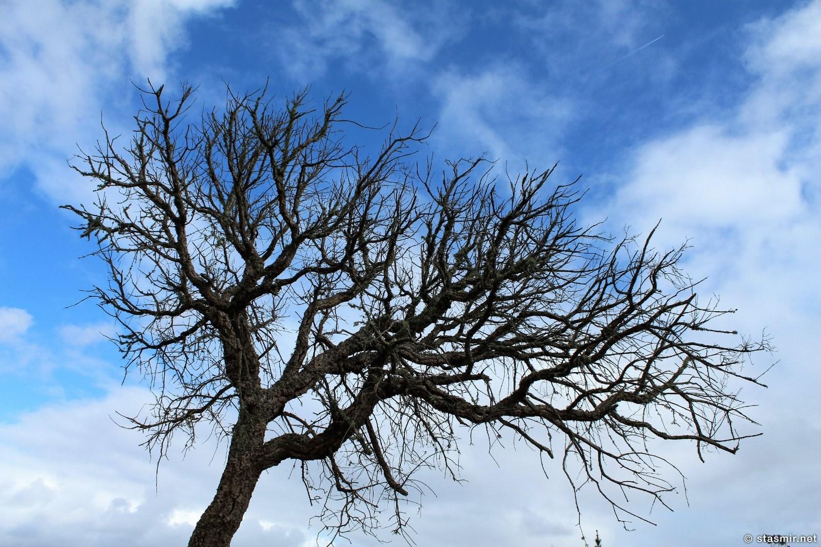 Дерево, Южная Португалия, фото Стасмир, photo Stasmir