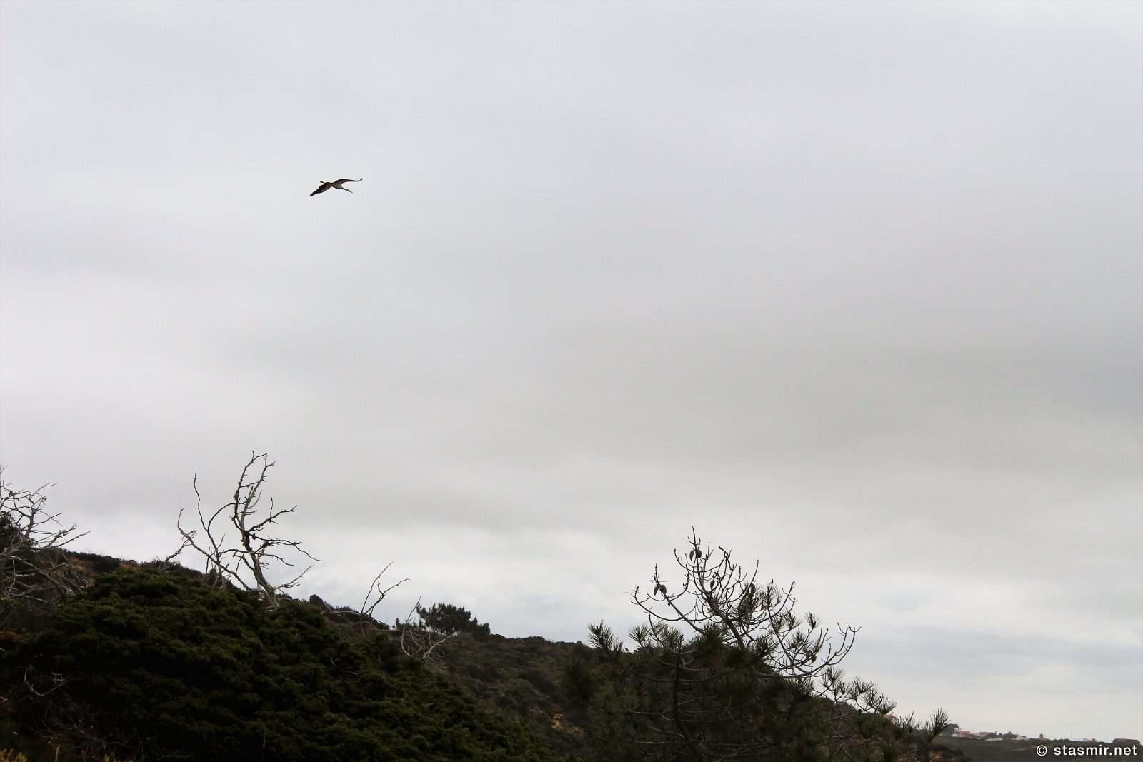 аист летит над Коштой Висентиной, Алгарве, Португалия, фото Стасмир, photo Stasmir