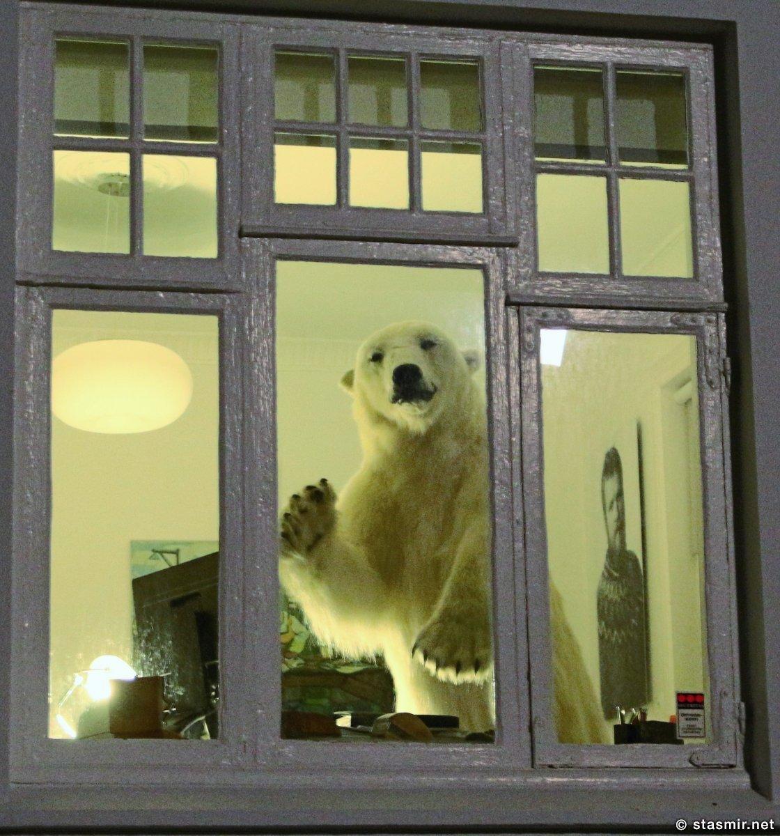 медведь в окне - Вестурбайер, фото Стасмир, Photo Stasmir