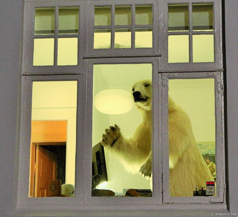 чучело белого медведя, Вестурбаер, западный город, Рейкьявик, Photo Stasmir