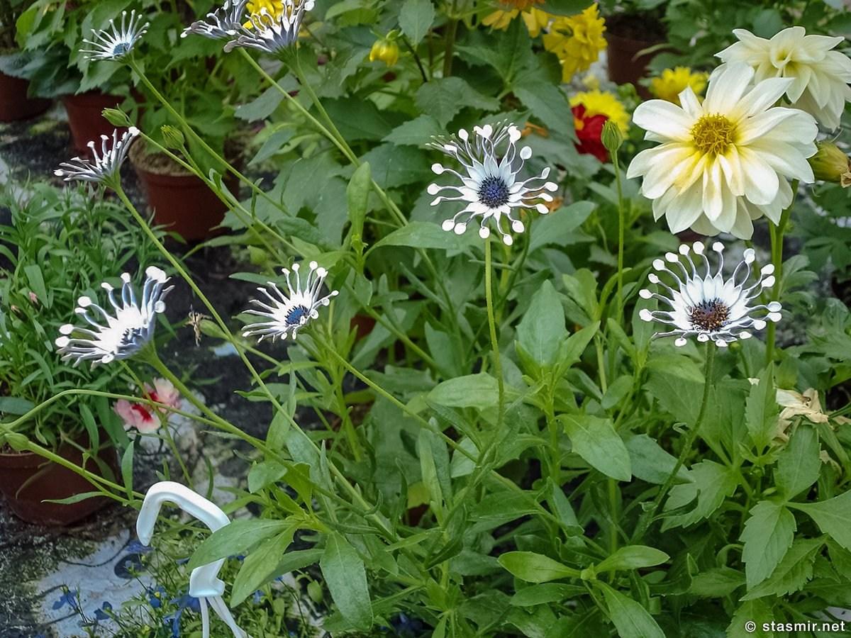 flower reign