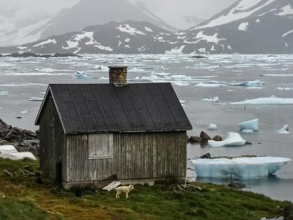 Гренландия, Greenland, Кулусук, Kulusuk, гренландская собака, голубые льдины, фото Стасмир, photo Stasmir