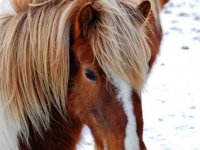 horsie