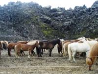horsies thorsmork thing