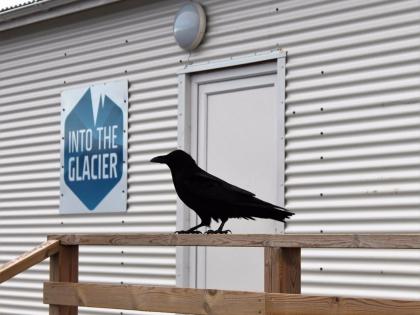 черный ворон на базе Клакки в Исландии, фотографии тура Into the Glacier, photo Stasmir, фото Стасмир