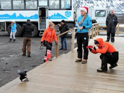 гиды кормят черного ворона на базе Клакки в Исландии, фотографии тура Into the Glacier, photo Stasmir, фото Стасмир