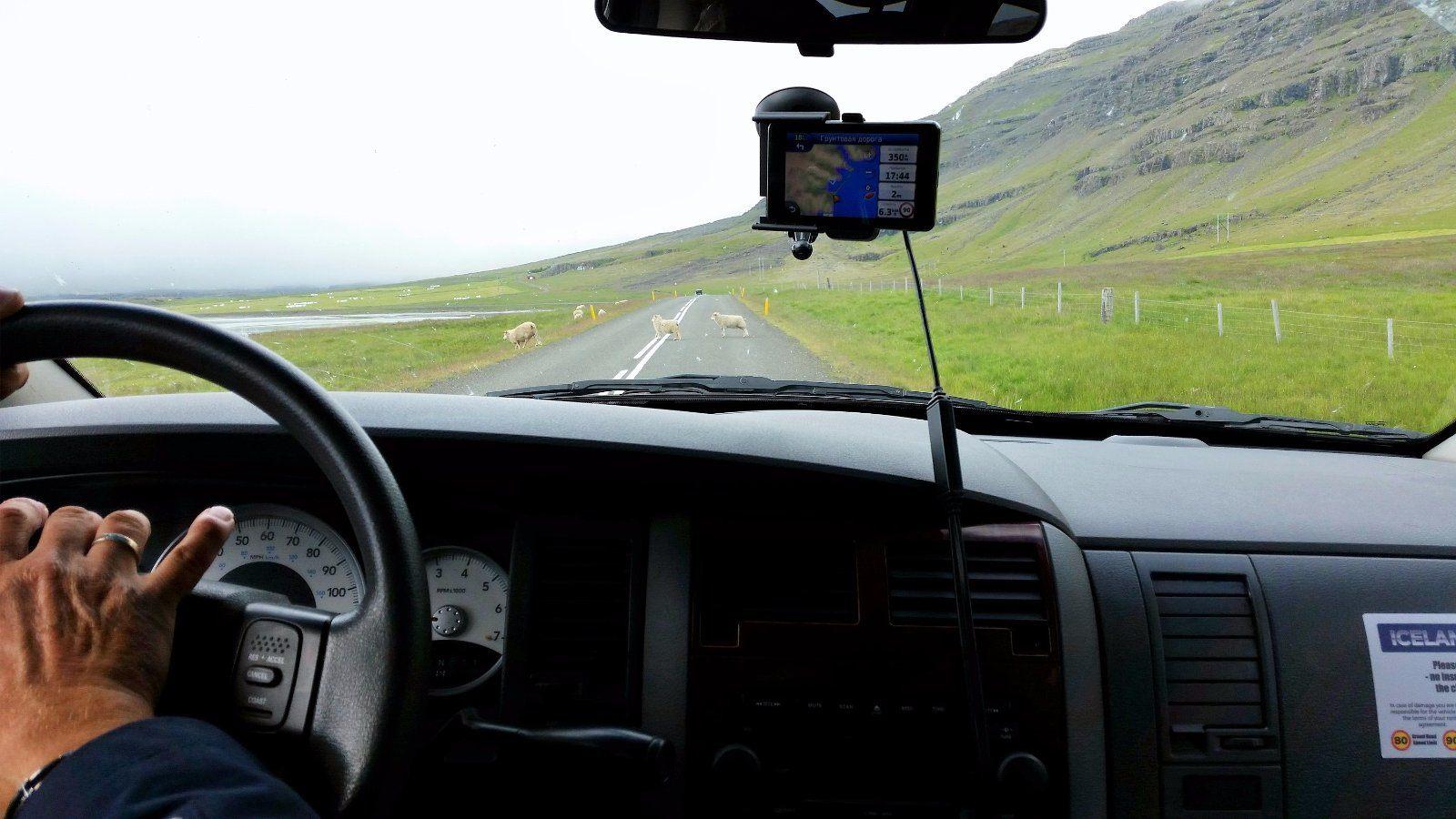 Заправка на навигаторе и овцы на дороге...