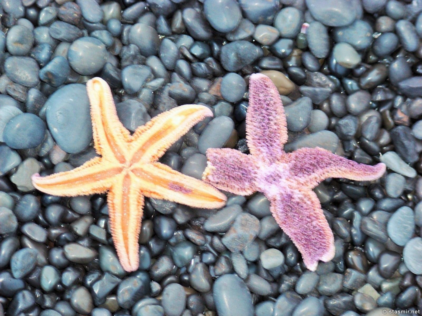 морские звезды на берегу в Исландии, фото Стасмир, Photo Stasmir