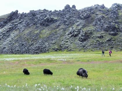 бараны и теплая река на Landmannalaugar, Ландманналёйгар, Лундаманналаугар, джип-сафари, Исландия, фото Стасмир, photo Stasmir,