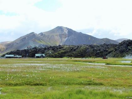 теплая река в районе Ланманналёйгар, туристическая база, купание в Ландманналёйгар, фото Стасмир, photo Stasmir, растение пушица, заросли пушицы в Исландии