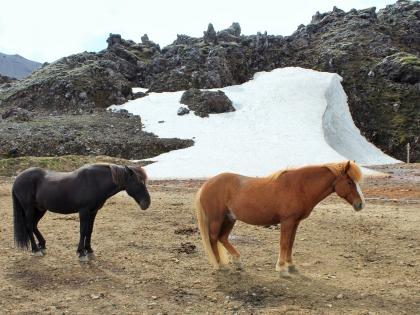 лошадки на Landmannalaugar, Ландманналёйгар, Лундаманналаугар, джип-сафари, Исландия, фото Стасмир, photo Stasmir,