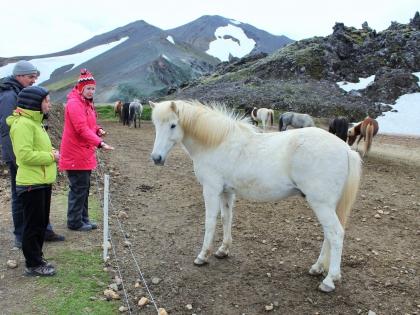 Landmannalaugar, лошадки на Ландманналёйгар, Лундаманналаугар, джип-сафари, Исландия, фото Стасмир, photo Stasmir,