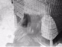 Hotel Villa Belvedere, CannobioCannobio, Cannobio, VB Italy, весна в Италии, весна в Пьемонте, провинция Вербано-Кузьо-Оссола, Пьемонт, Италия, туры в Италию, Станислав Смирнов, Стасмир, Стасмир Трэвэл, Стасмир Исландский, Stasmir, Stanislav Smirnov