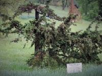 Troubetsky, Трубецкой, дерево Трубецкого, наши в Италии, цветы Северной Италии