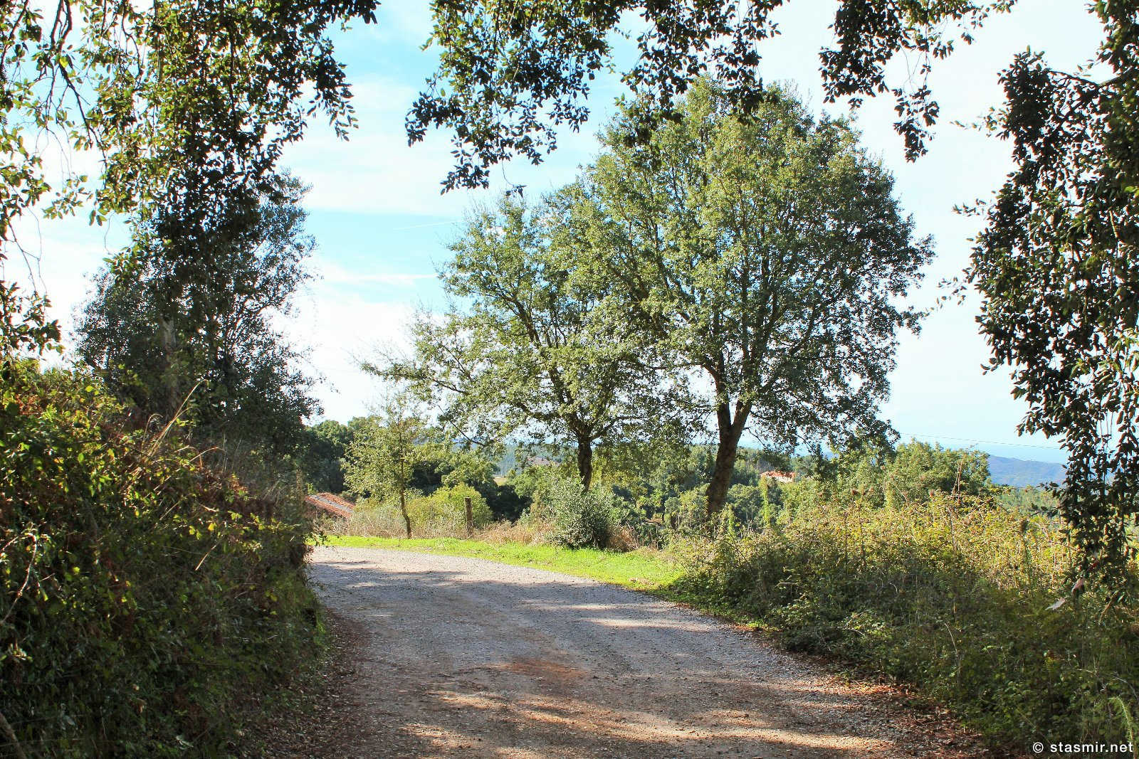пеший маршрут вокруг Мармелете, Альгарве, фото Стасмир, photo Stasmir, Percurso Pedestre de Marmelete, Моншик, Мармелете, дубы в Португалии