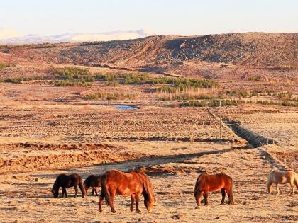 лошадки на Úlfarsfell, Hafravatn, Mosfellsbær, фото Стасмир, Photo Stasmir, исландские лошадки