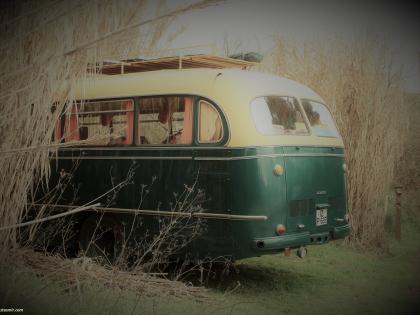Старый автобус в камышах Португалии, фото Стасмир, photo Stasmir